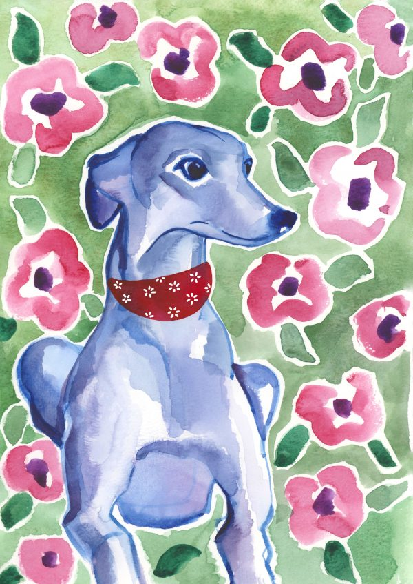 whippet watercolour illustration